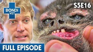 mystery-baby-falcon-s05e16-bondi-vet