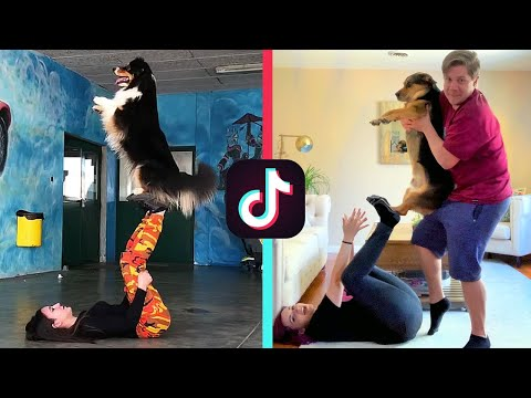 recreating-dog-tik-tok-videos