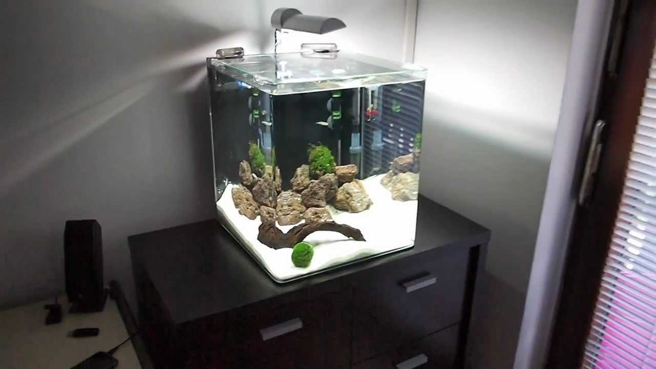 freshwater nano cube aquarium day 13 youtube. Black Bedroom Furniture Sets. Home Design Ideas