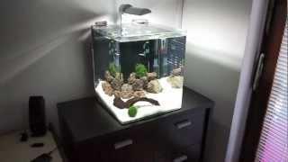 Freshwater Nano Cube Aquarium (Day 13)
