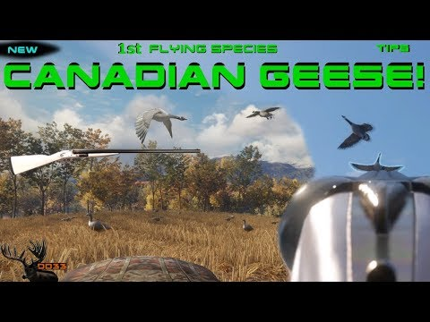 Getting SET UP For The CANADIAN GEESE!!  CALL OF THE WILD 2018