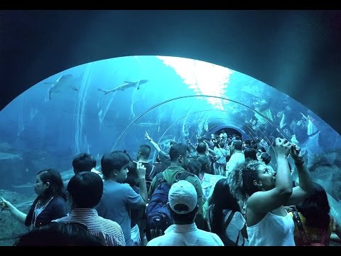 Full Tour Of Sea Aquarium Singapore Resorts World Sentosa