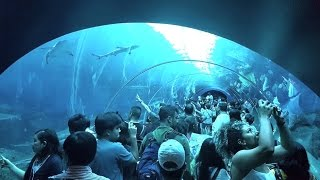 FULL TOUR of SEA Aquarium Singapore @ Resorts World Sentosa