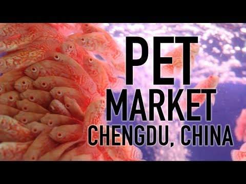 China's Thriving Pet Industry // Touring a Chinese Pet Market