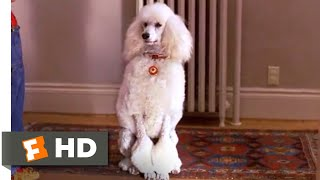 Look Who's Talking Now (1993) - Brand New Poodle Scene (3/10)   Movieclips