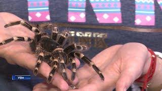 Уфимец держит в своей квартире более тысячи пауков-птицеедов