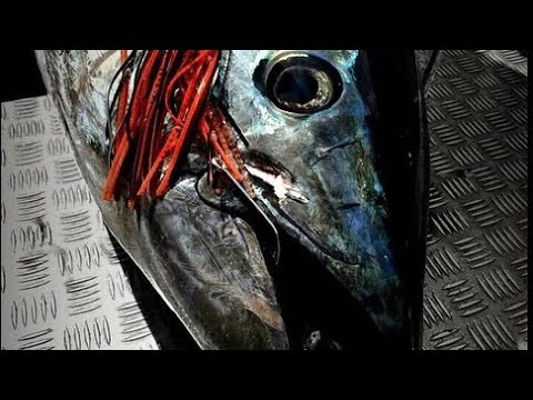 HOW TO CATCH A BIG BLUEFIN TUNA - YouFishTV