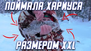 Поймали хариуса размером XXL Зимняя рыбалка на хариуса В эту рыбалку ловился только крупняк