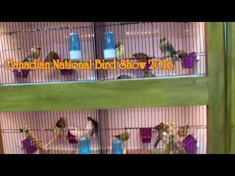 Canadian National Cage Bird Show & Expo 2016