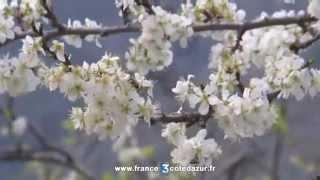 Pesticide Cruiser interdit: les apiculteurs de la Côte d'Azur veulent aller plus loin.