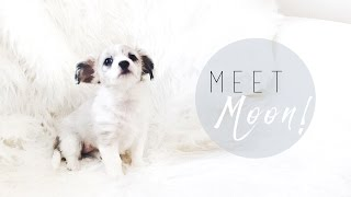 WE GOT A PUPPY! | I Covet Thee