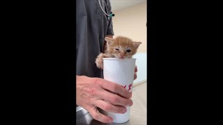 Kitten in Dunkin Cup Held by Vet Winks Going Out
