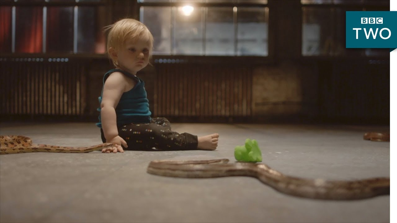 Why aren't babies afraid of snakes? - The Human Body: Secrets of Your Life Revealed | BBC Two