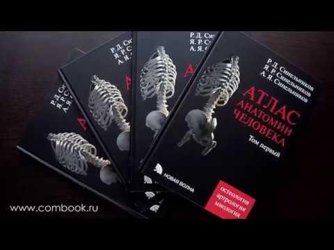 Книга: атлас анатомии человека (human anatomy). Автор: фрэнк неттер. Аннотация, отзывы читателей, иллюстрации. Купить книгу по привлекательной цене среди миллиона книг