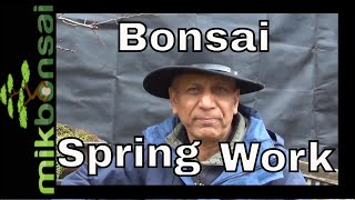 bonsai-care-and-maintenance-spring-repotting-pruning-hawthorn