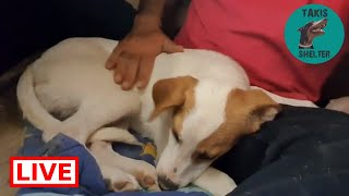 Abrazo needs a lot of work to trust people. They poisoned him so I dont blame him - Takis Shelter