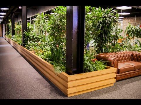 Озеленение офиса от Dream FLowers
