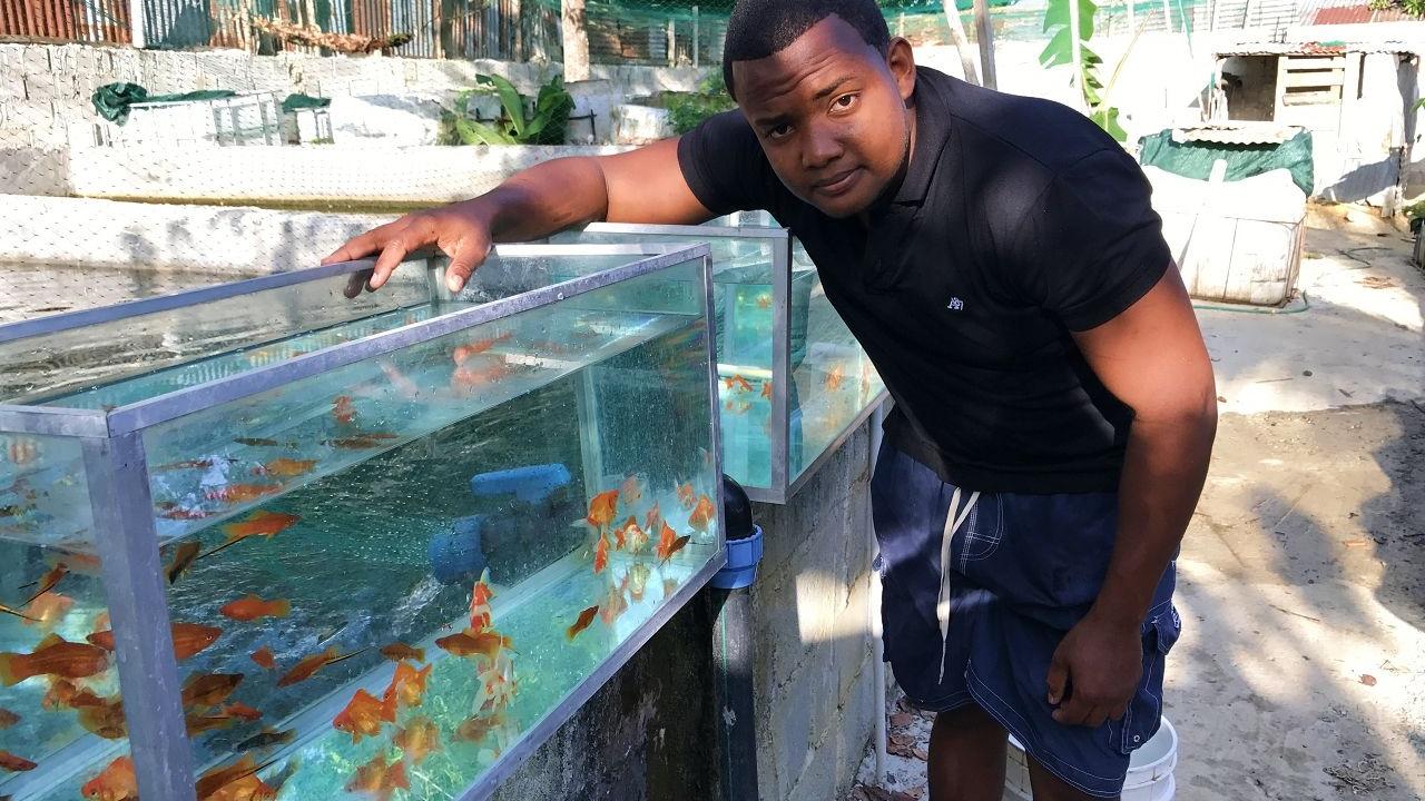 Importancia de los peces cola de espadas para nuestro for Criadero de peces goldfish