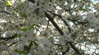 В Воронеже на фруктовых деревьях «зацвели» коты.