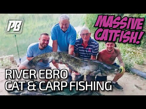 Carp And Cat Fishing For River Ebro Monsters Part 1 ! *CRAZY*