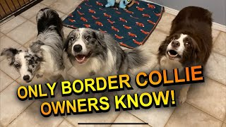 Things only border collie owners would know!