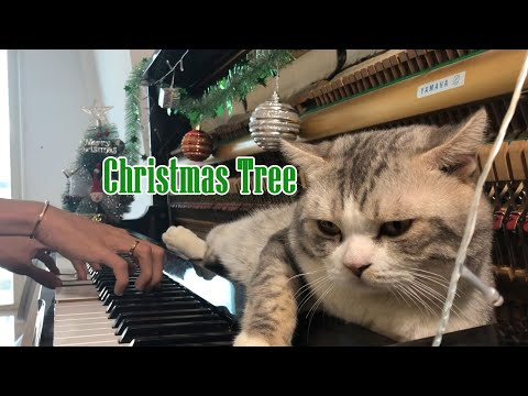 Christmas Tree | piano massage for meow