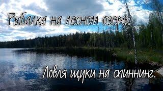 Рыбалка на лесном озере.