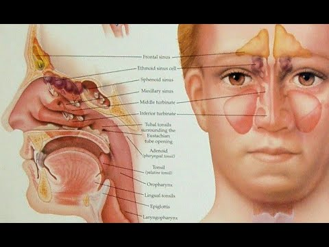 ALLERGY & SINUSITIS - Samoohyapadam