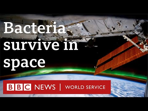 'Super bacteria' survive in space for years - BBC World Service