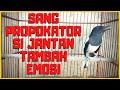 Suara Kacer Betina Birahi Memancing Kacer Jantah Dijamin Langsung Gacor Konslet  Mp3 - Mp4 Download