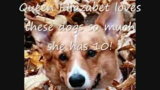 Dog Breeds-pembroke Welsh Corgi
