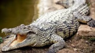 A crocodile attack and kills a middle age woman while fetching water in Mwingi
