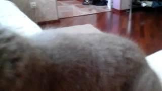Мой кот не может встать с моих ног