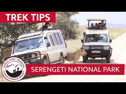 Serengeti National Park - What to Expect on Your African Safari | Trek Tips