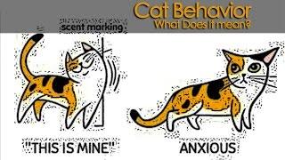 Cat Behavior | What Does It Mean?
