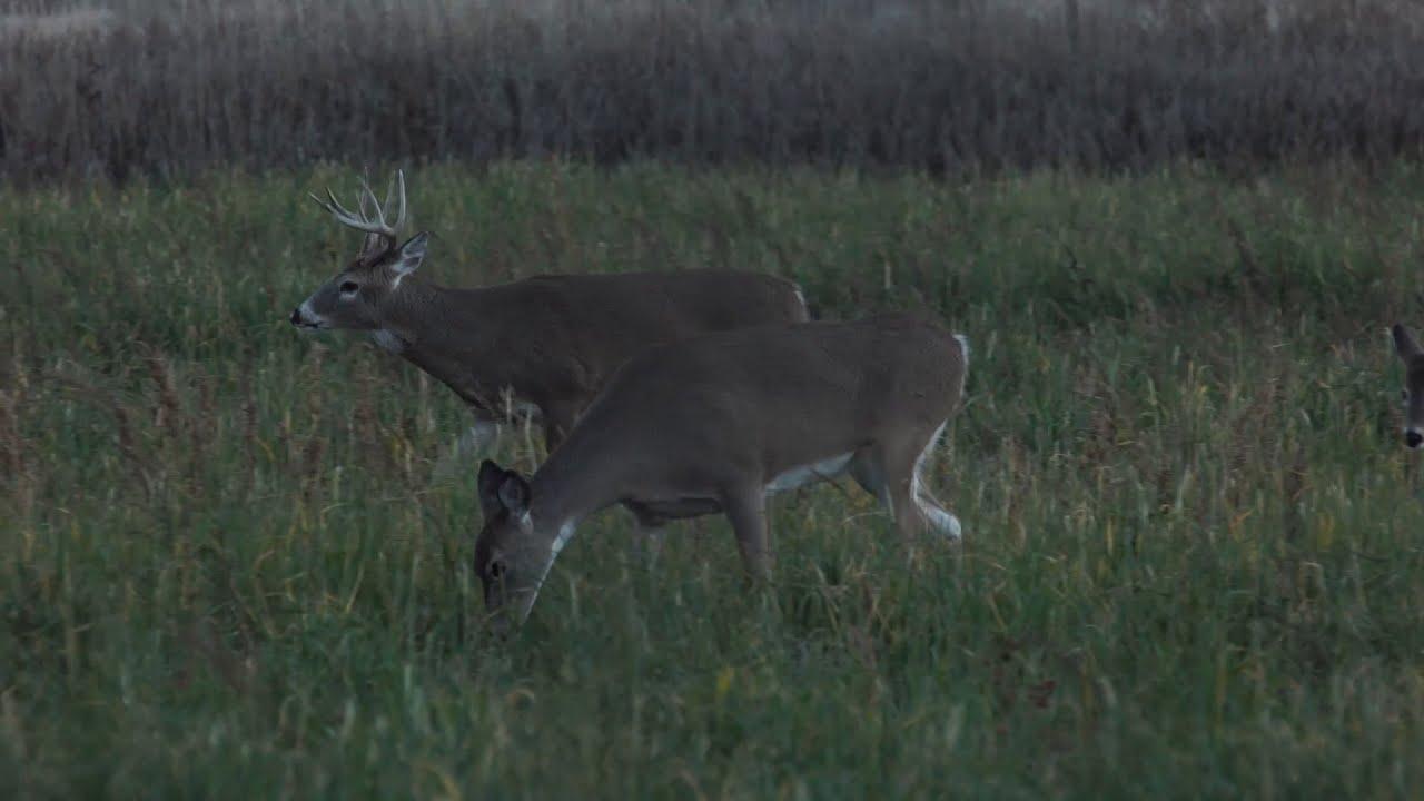 Mule Deer vs. Whitetails: Differences for the Hunt - Deer & Deer ...