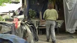 Стерилизация собак в Гидропарке, Киев