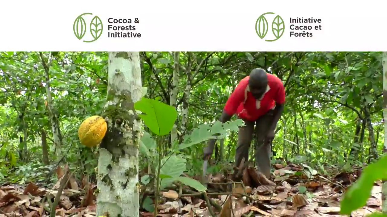Cocoa farming deforestation and agroforestry | Lumina Intelligence