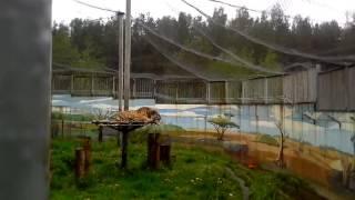 Я в Ярославльском зоопарке!!(фото зверей не все)(27)