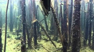 Осень 2014 - подводная охота Gopro