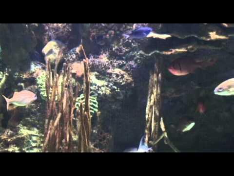 PL1: FOSSIL BONY FISH: TELEOSTS