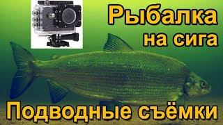 Ловля крупного сига весной. Подводные съёмки рыбалки. Озеро Сторуман. Рыбалка в Швеции.