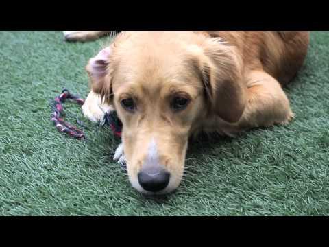 Köpeklerde aşırı korku neden kaynaklanır, nasıl tedavi edilir?