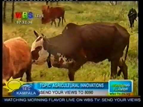 AFRISA – UNDERSTANDING LIVESTOCK FEEDS FOR SPECIFIC ANIMALS