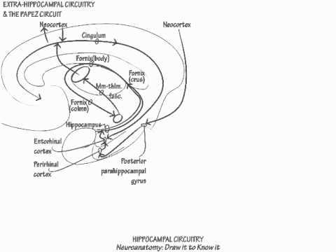 Hippocampus Circuitry