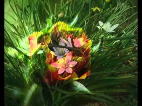 Уникальные экзотические цветы.