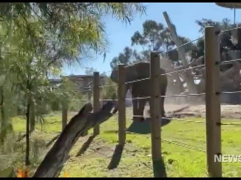 Father and Toddler Jump Into An Elephant Pen At The San Diego Zoo