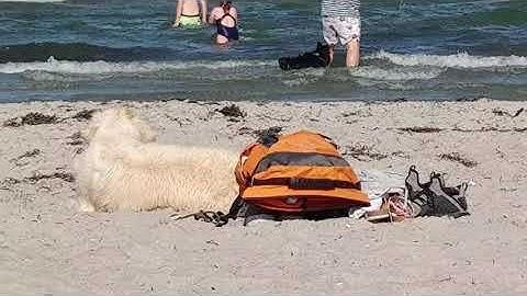 Ostsee Hundestrand-Tipps | Scharbeutz + Haffkrug mit Hund