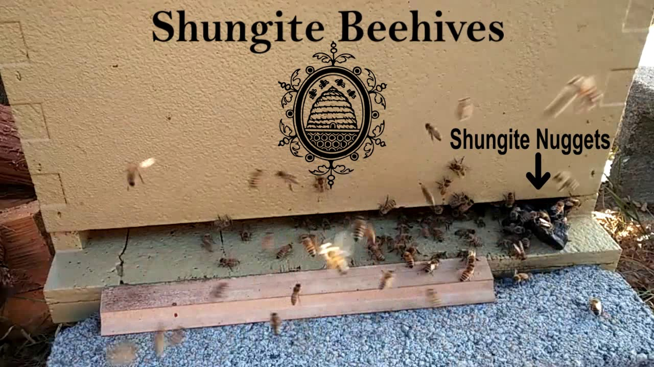 How does Shungite help the bees? | Knowledge Base