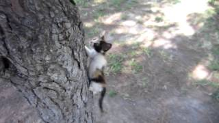 Little kitten cat climbing up a tree for the first time.